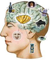 The role of the insula in many human behaviors